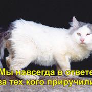 Блог. Ирина Уаман Янксе группа в Моем Мире.