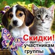 Домашние животные, собаки, кошки и др... group on My World