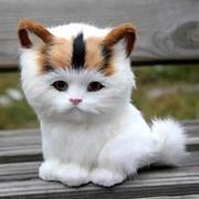 Добрый Кот on My World.