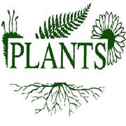 Plants company on My World.